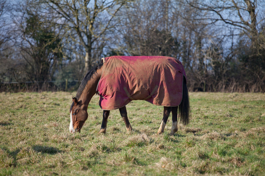 horse grazing showing rug fit on shoulders