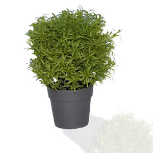 209 Decoratives -Potted Plastic Artificial Plants