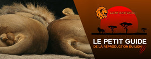 La Reproduction du Lion en Afrique