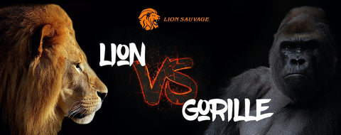 Lion vs Gorille qui gagne ?