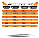 guide des tailles T-Shirt Lion Or