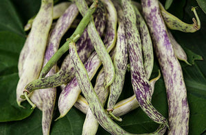 Bean, Dragon Tongue