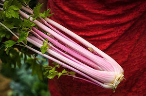 Celery, Chinese Pink