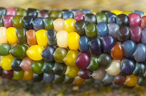 Corn, Glass Gem