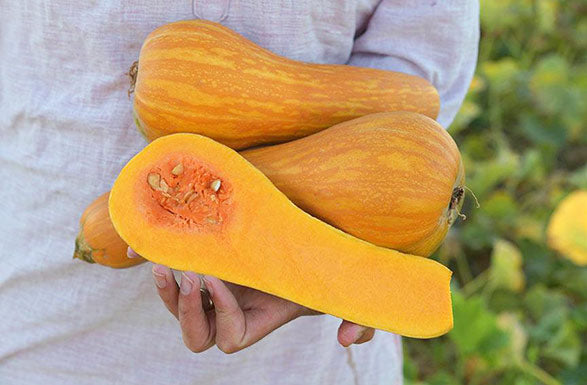 Squash, Orange Butternut