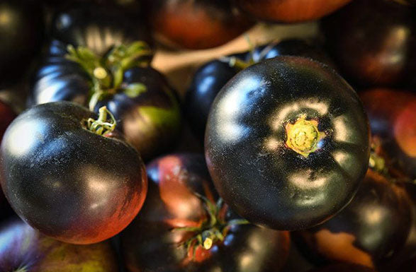Tomato, Black Beauty
