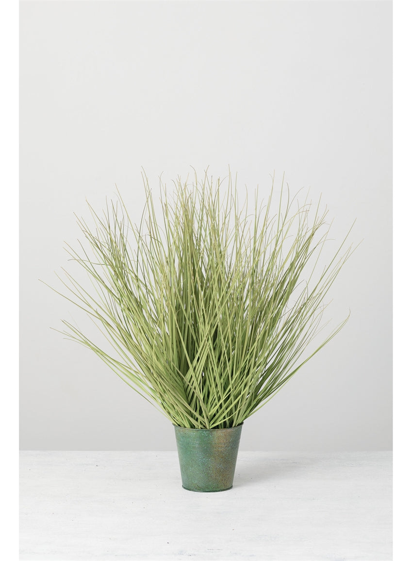 Sullivans - Potted Onion Grass