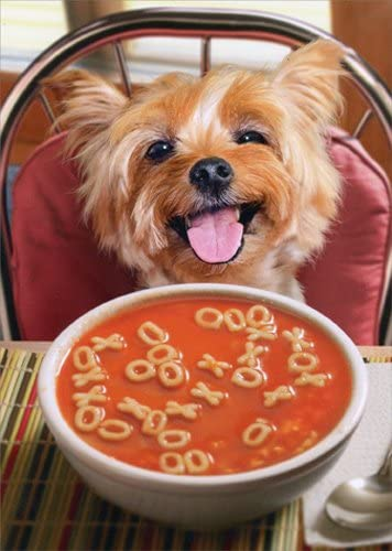 Avanti - Dog Get Well Soup Card