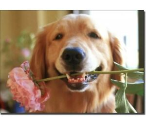 Avanti - Golden Retriever With Pink Flower Blank Inside Card