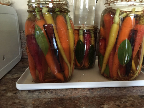 Raw Fermented Rainbow Carrots by Natasha MacAller