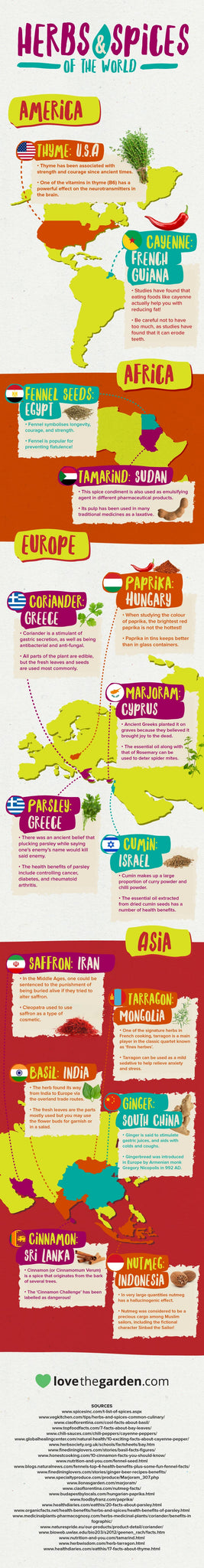 Herbs and Spices Infographic