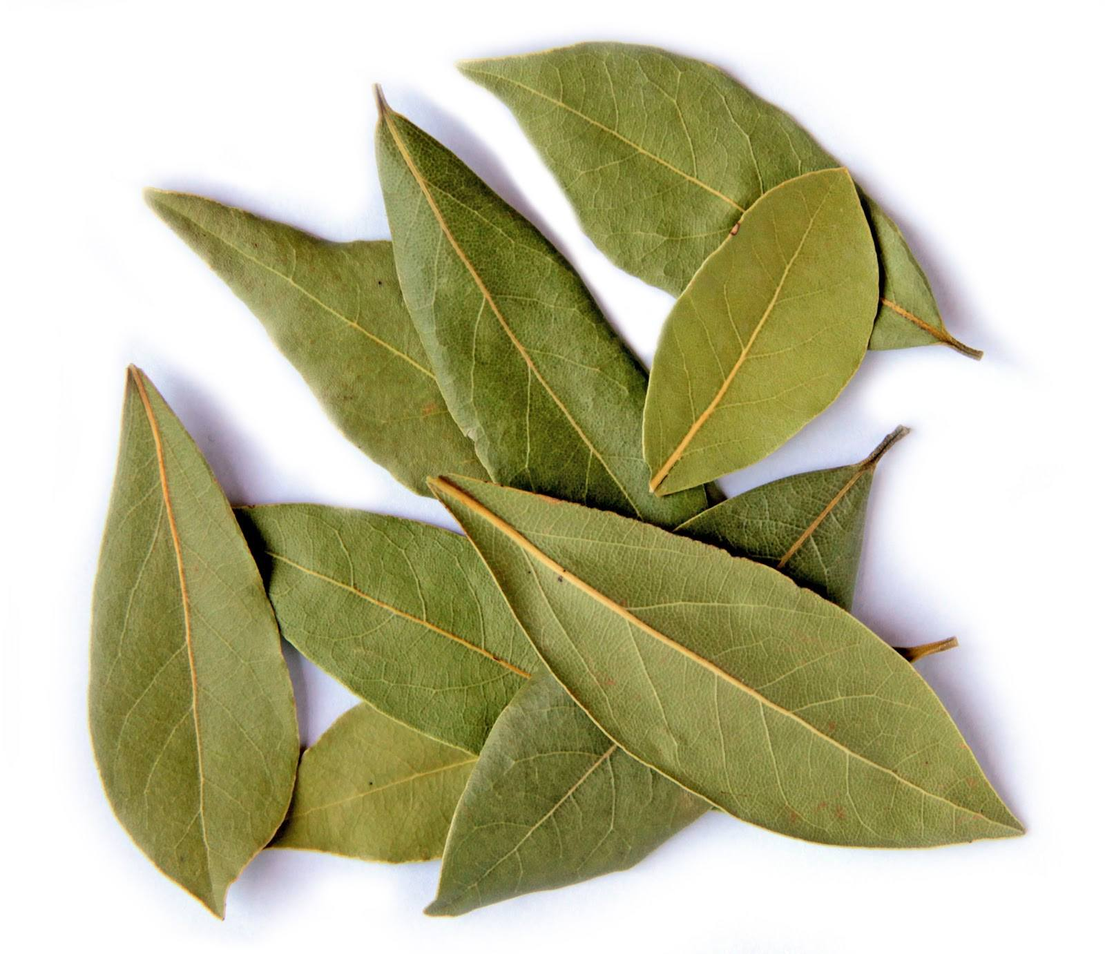 Bay Leaves 50g - Spice Kitchen - Spices, Spice Blends, Gifts & Cookware