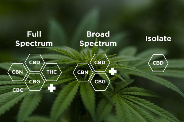 Full Spectrum, Broad Spectrum, and Isolate: Which Should You Choose?