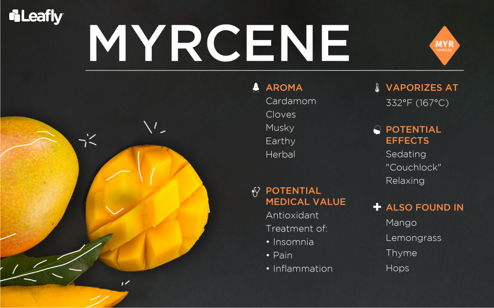 What Are Terpenes? | On The Green CBD