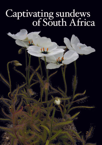 South African Winter Growing Drosera Guide