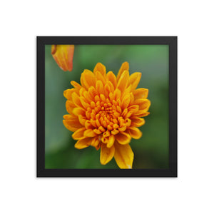 Yellow Flowe- Framed photo paper poster