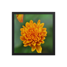 Load image into Gallery viewer, Yellow Flowe- Framed photo paper poster