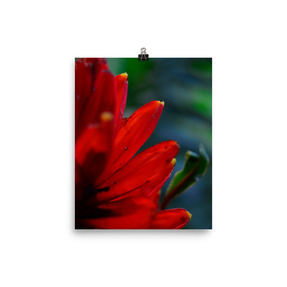 Red Banana Flower - Photo paper poster