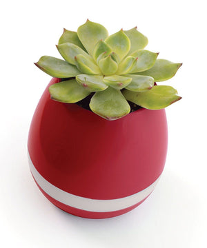 Bluetooth Color Changing Musical Flower Pot