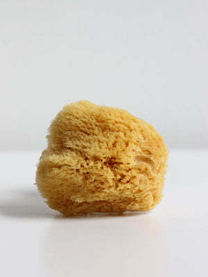 NATURAL CARIBBEAN SILK SEA SPONGE
