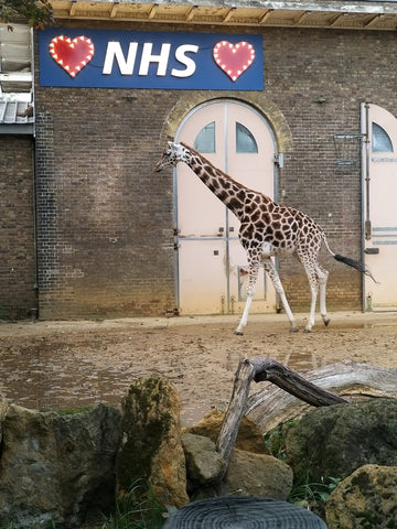 Big love for the NHS at the ZSL London Zoo