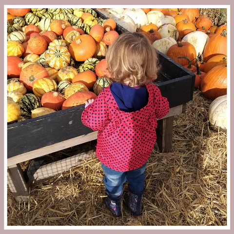 Picking fresh pumpkins and squash in the lead up to Halloween