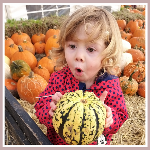 Pumpkin picking in the lead up to Halloween - a fun day out with the kids