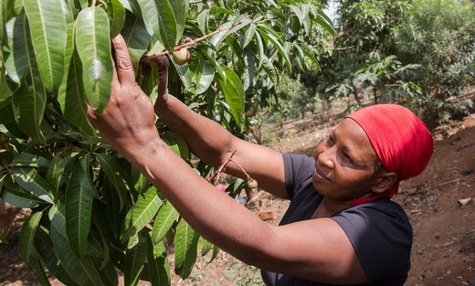Find My Farm - Felister Builds Up Her Family Through Fruit Farming
