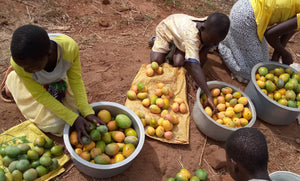 African children sorting mangoes