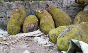 Rotting jackfruit going to waste at a local market in Uganda