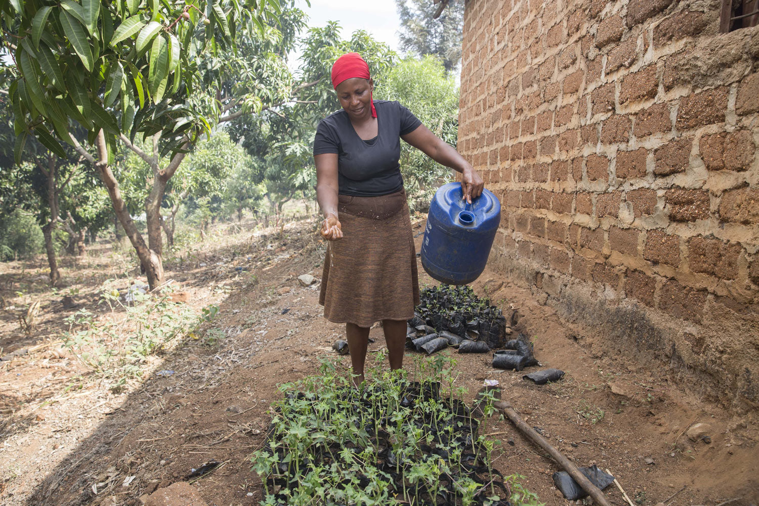 African woman waters small plants from a blue canister