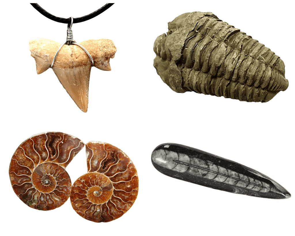 Collection of a fossil shark tooth on cord, trilobite fossil, cut and polished ammonite and orhoceras polished point