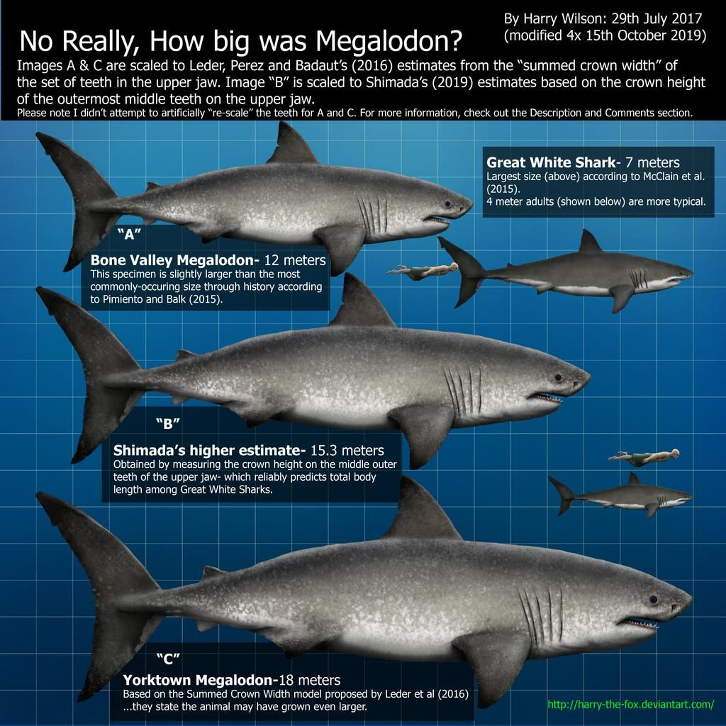 Comparison between modern sharks and megalodon poster