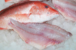 Fresh red snapper filets