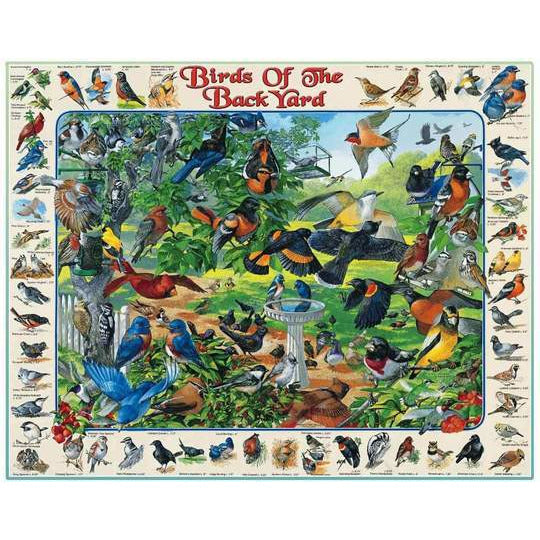 Birds Of The Backyard 1000 Pc