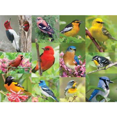 Birds of a Feather 500 Pc