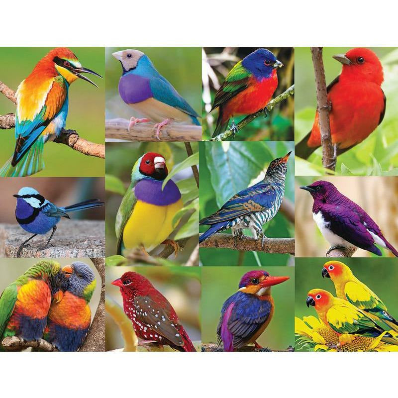 Birds Of Paradise 500 Pc