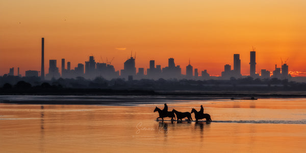 Horses being exercised on Altona Dog Beach with the Melbourne CBD skyline in the distance
