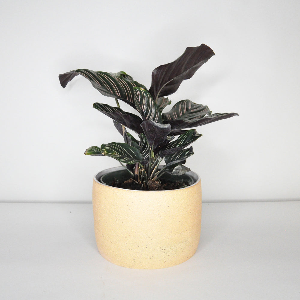 Medium Neutral Planter