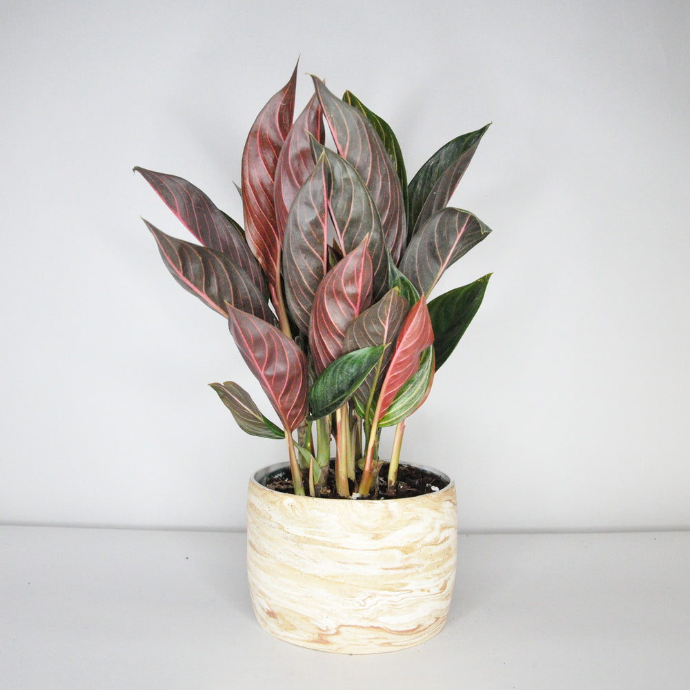 Load image into Gallery viewer, Medium Marble Planter