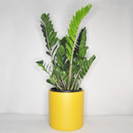 Large Hunny Mustard Planter