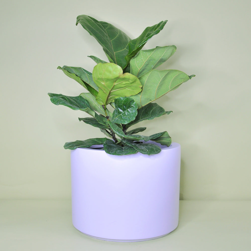 Extra Large Lilac Planter