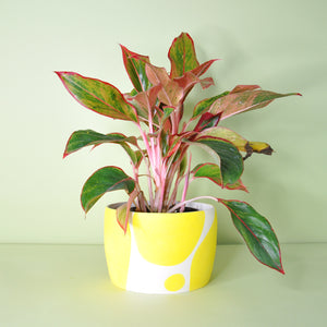 Medium Yellow Dot Planter