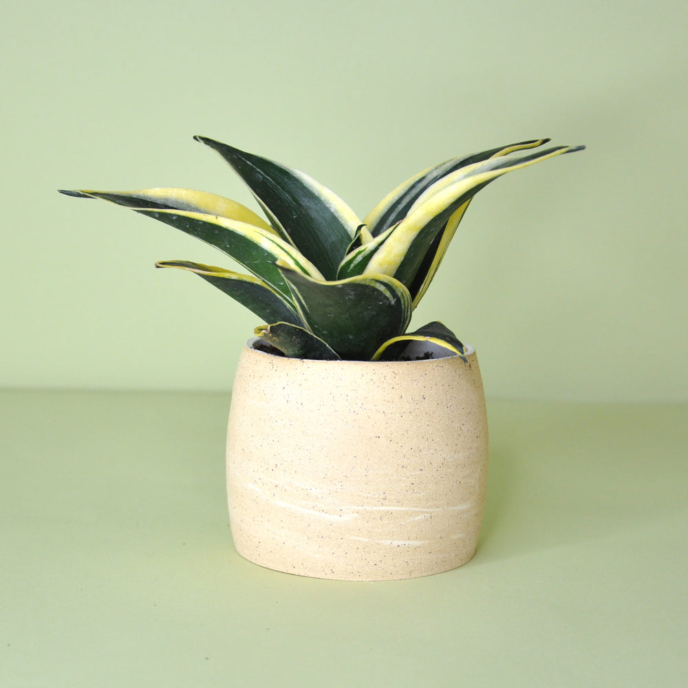 Small Neutral Planter