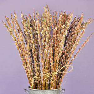 Pink Pussy Willow Bundle