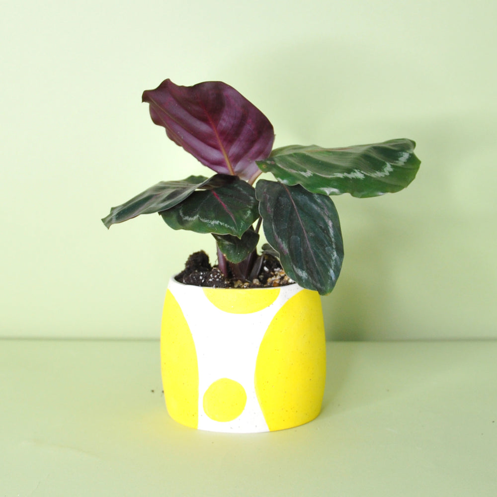 Load image into Gallery viewer, Small Yellow Dot Planter