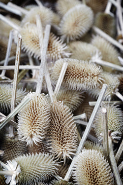 Teasels are still used by this traditional firm