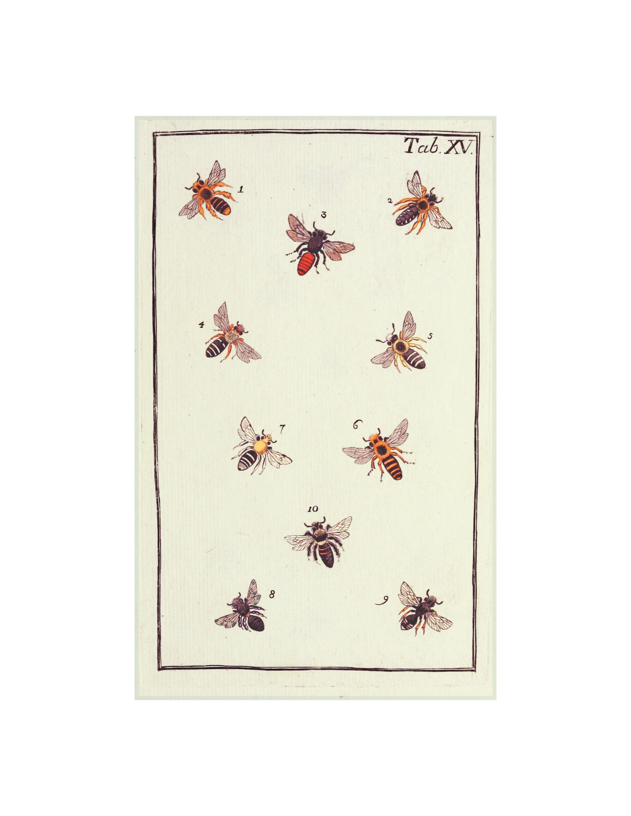 "Bees - 5x8"" rectangle"