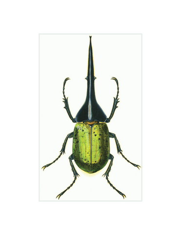 "Green Beetle - 5 x 8"" rectangle"