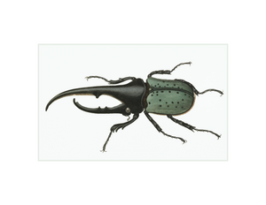 "Hercules Beetle - 5x8"" rectangle"
